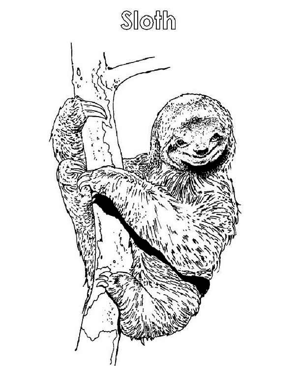 Sloth, : S is for Sloth Coloring Page