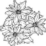 Poinsettia, Shaking Poinsettia Coloring Page: Shaking Poinsettia Coloring Page