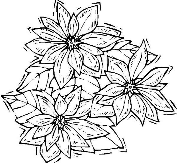 Poinsettia, : Shaking Poinsettia Coloring Page