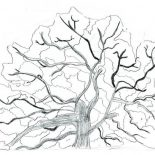 Oak Tree, Sketch Of An Oak Tree Coloring Page: Sketch of an Oak Tree Coloring Page