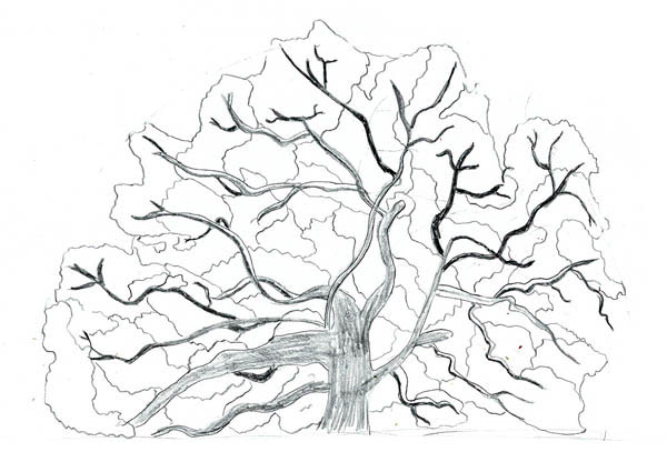 Oak Tree, : Sketch of an Oak Tree Coloring Page
