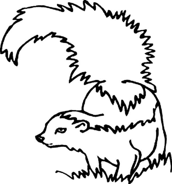 Skunk, : Skunk Cautious of Enemy Coloring Page