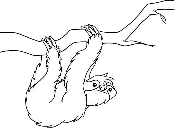 Sloth, : Sloth Coloring Page for Kids