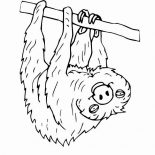 Sloth, Sloth Hanging Upside Down Coloring Page: Sloth Hanging Upside Down Coloring Page