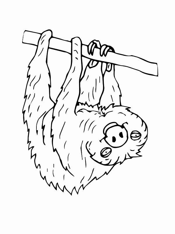 Sloth, : Sloth Hanging Upside Down Coloring Page