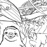 Sloth, Sloth Live In The Jungle Coloring Page: Sloth Live in the Jungle Coloring Page