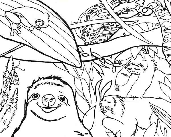 Sloth, : Sloth Live in the Jungle Coloring Page