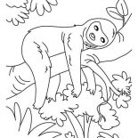 Sloth, Sloth Sleeping Coloring Page: Sloth Sleeping Coloring Page