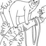 Sloth, Sloth In The Rain Forest Coloring Page: Sloth in the Rain Forest Coloring Page