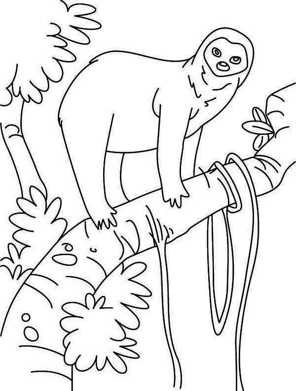 Sloth, : Sloth in the Rain Forest Coloring Page
