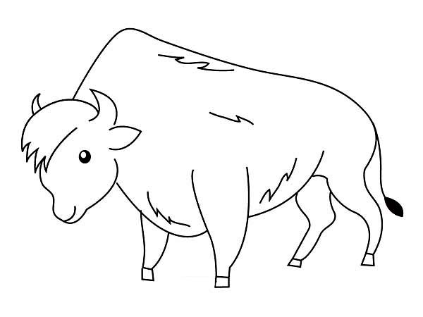 Bison, : Smiling Bison Coloring Page