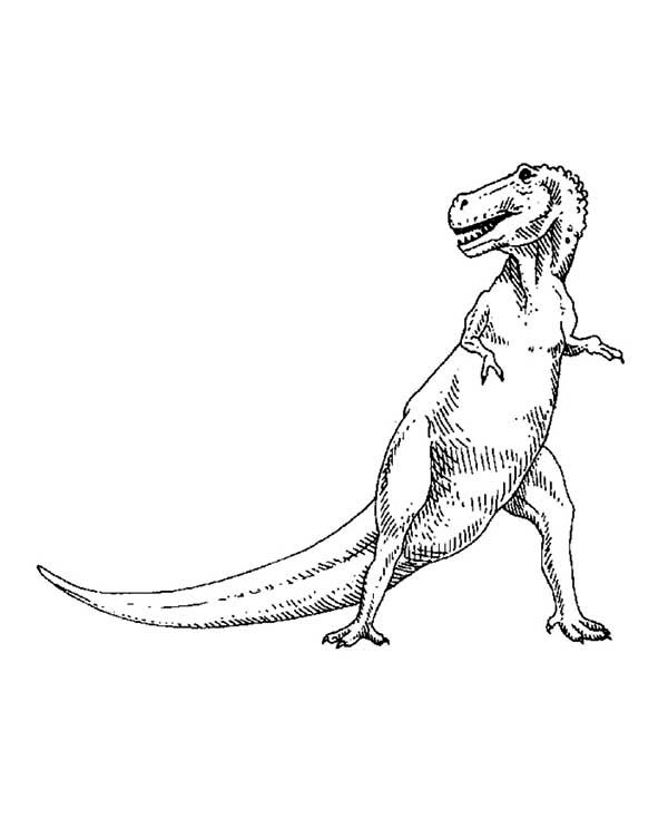 T-Rex, : T Rex the Dinosaurus Coloring Page