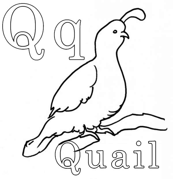 Quail, : The King Quail Coloring Page