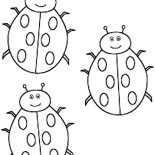 Lady Bug, Three Cute Lady Bug Coloring Page: Three Cute Lady Bug Coloring Page