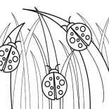 Lady Bug, Three Little Lady Bug Coloring Page: Three Little Lady Bug Coloring Page