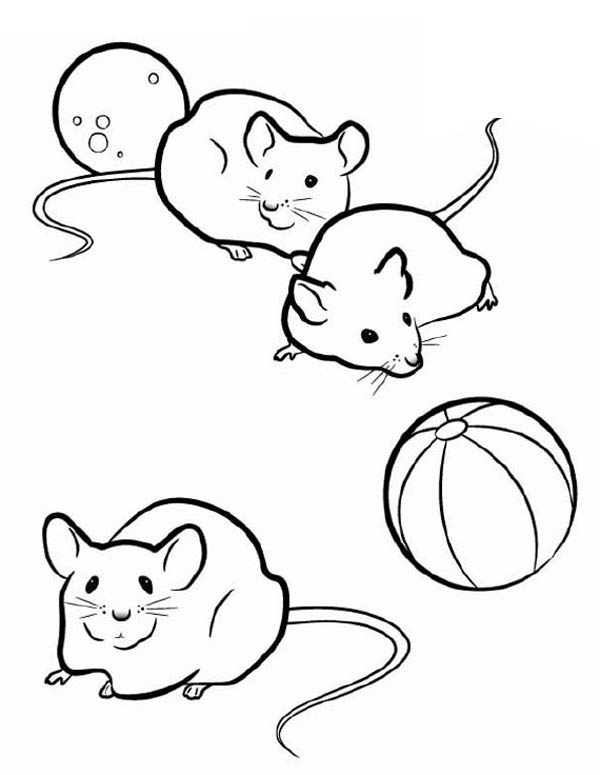 Guinea Pig, : Three Mice in Guinea Pig Coloring Page