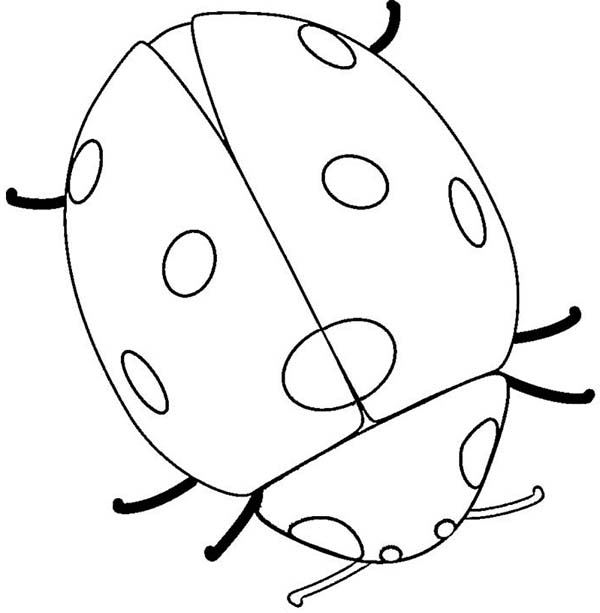 Lady Bug, : Very Big Lady Bug Coloring Page