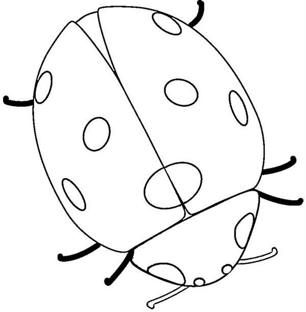 Lady Bug, : Very Big Lady Bug Coloring Page