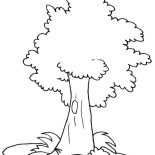 Oak Tree, White Oak Tree Coloring Page: White Oak Tree Coloring Page
