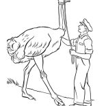 Ostrich, A Tall Ostrich Coloring Page: A Tall Ostrich Coloring Page