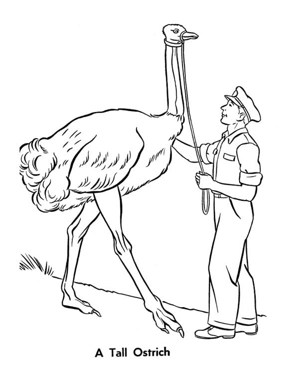 Ostrich, : A Tall Ostrich Coloring Page