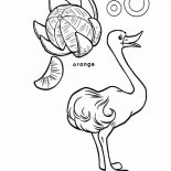 Ostrich, An Ostrich And An Orange Coloring Page: An Ostrich and An Orange Coloring Page