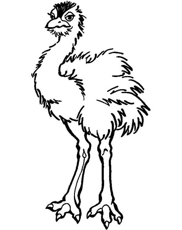 Ostrich, : Beautiful Feather Ostrich Coloring Page