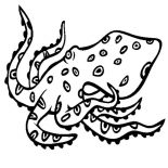 Octopus, Blue Ringed Octopus Coloring Page: Blue Ringed Octopus Coloring Page