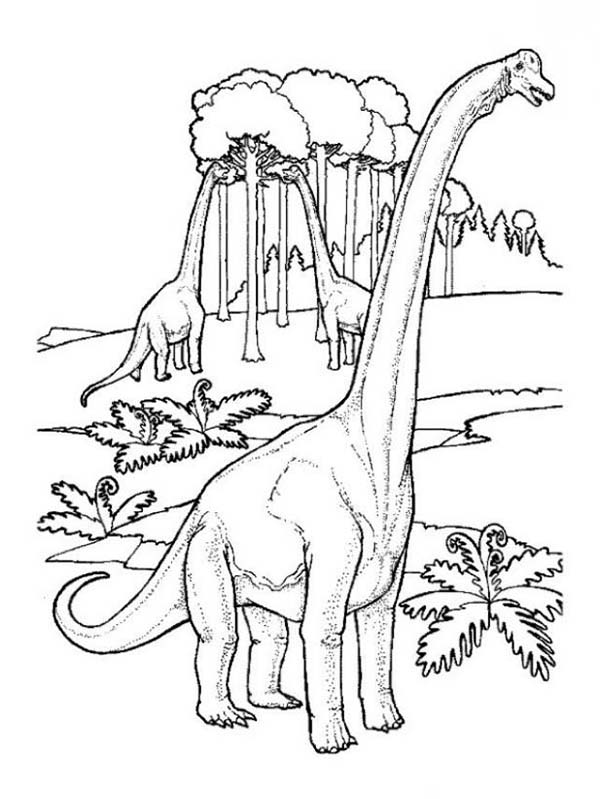 Brachiosaurus, : Brachiosaurus in the Jungle Coloring Page