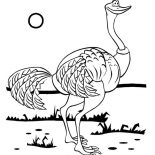 Ostrich, Hungry Ostrich Looking For Food Coloring Page: Hungry Ostrich Looking for Food Coloring Page