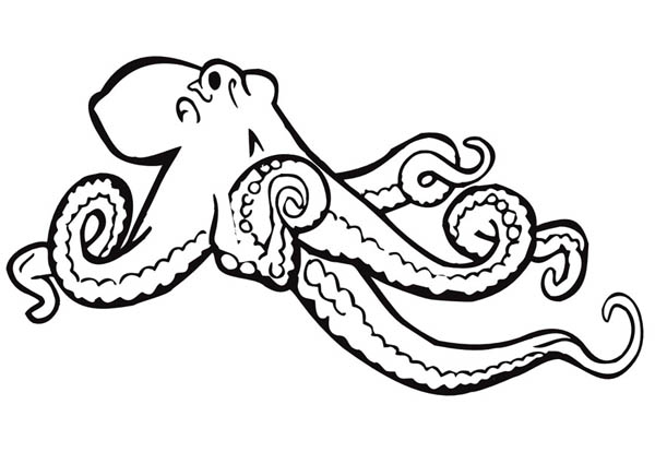 henry the ocotopus coloring pages - photo#34