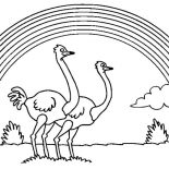 Ostrich, Ostrich Couple Under The Rainbow Coloring Page: Ostrich Couple Under the Rainbow Coloring Page
