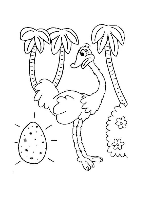 Ostrich, : Ostrich Egg Coloring Page