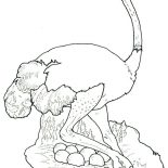 Ostrich, Ostrich Hide Her Eggs Coloring Page: Ostrich Hide Her Eggs Coloring Page