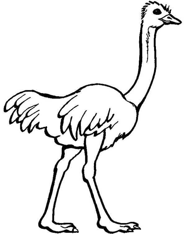 Ostrich, : Ostrich Image Coloring Page
