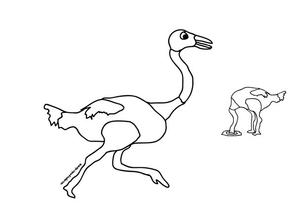 Ostrich, : Ostrich Running Wild Coloring Page