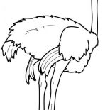 Ostrich, Ostrich Strong Feet Coloring Page: Ostrich Strong Feet Coloring Page