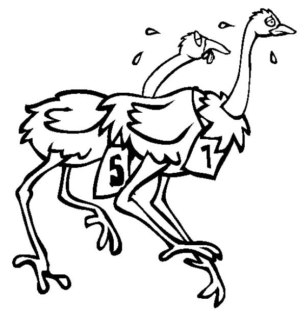 Ostrich, : Ostrich is on Race Coloring Page