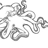 Octopus, Sea Monster Octopus Coloring Page: Sea Monster Octopus Coloring Page