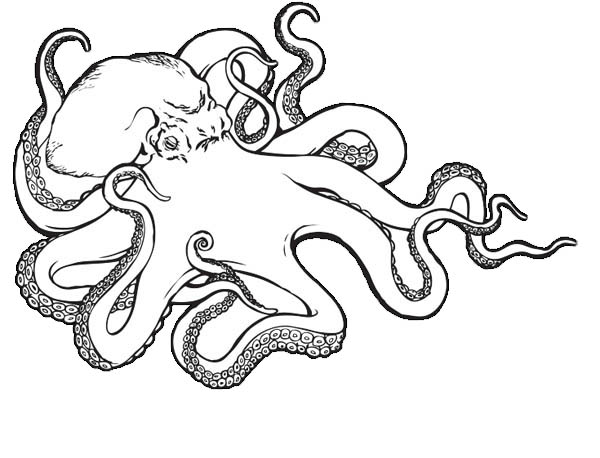Octopus, : Sea Monster Octopus Coloring Page