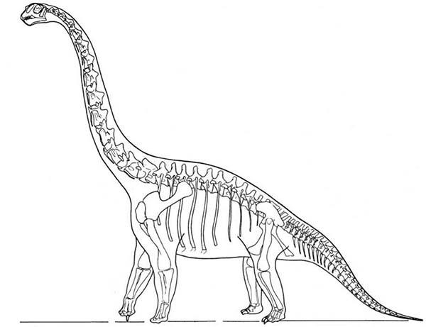 Brachiosaurus, : Skeleton Brachiosaurus Dinosaurus Coloring Page