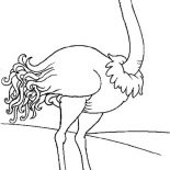 Ostrich, Smiling Ostrich Coloring Page: Smiling Ostrich Coloring Page