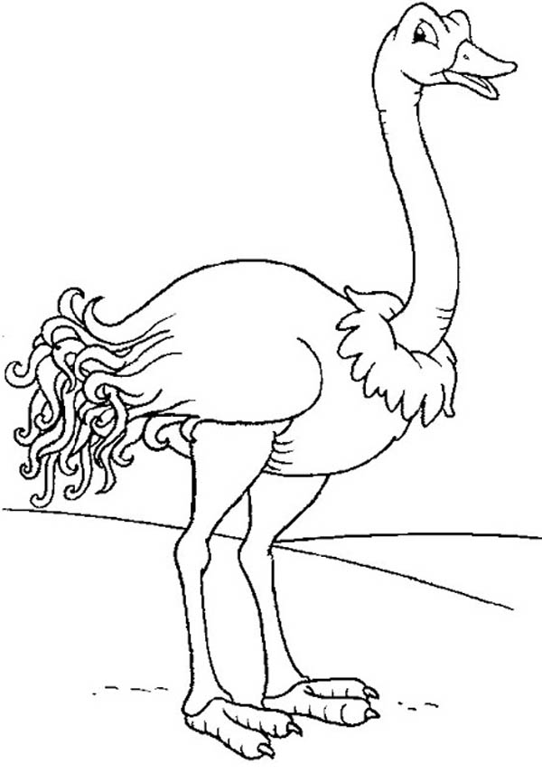 Ostrich, : Smiling Ostrich Coloring Page