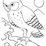 Birds, An Owl Bird Howling In The Night Coloring Page: An Owl Bird Howling in the Night Coloring Page