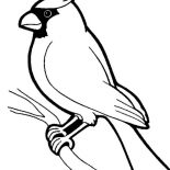 Birds, Awesome Bird Standing On Tree Branch Coloring Page: Awesome Bird Standing on Tree Branch Coloring Page
