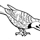 Birds, Beautiful Bird Find Seed To Eat Coloring Page: Beautiful Bird Find Seed to Eat Coloring Page