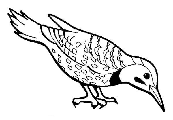 Birds, : Beautiful Bird Find Seed to Eat Coloring Page