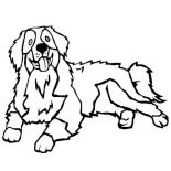 Dogs, Bernese Mountain Dog Coloring Page: Bernese Mountain Dog Coloring Page