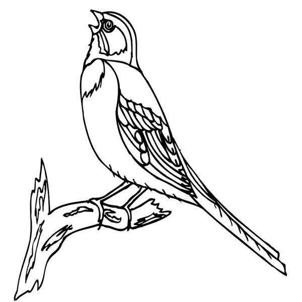Birds, : Bird Chirping Bird Coloring Page