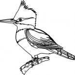 Birds, Bird Coloring Page For Kids: Bird Coloring Page for Kids
